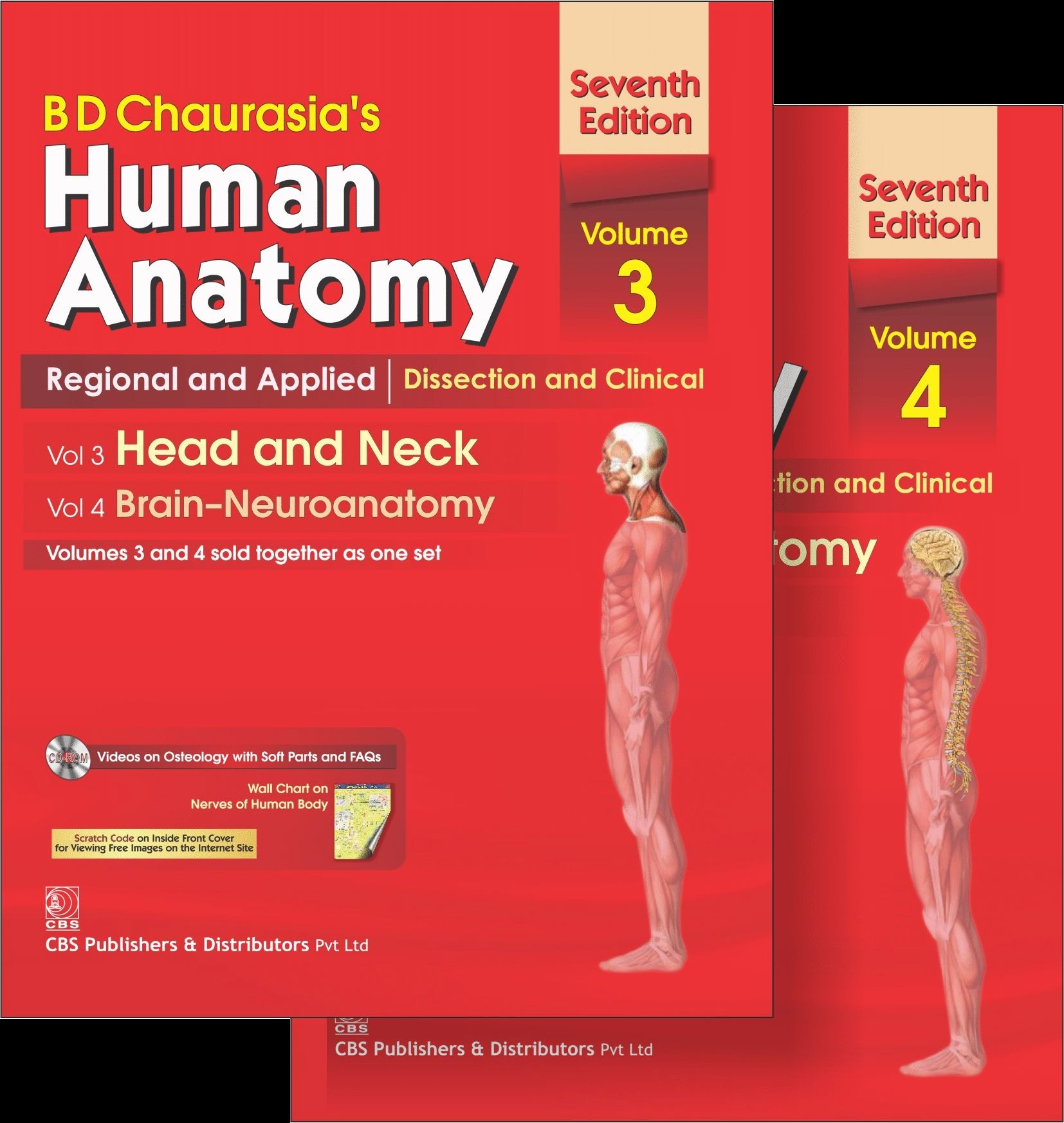 Buy Human Anatomy: Head and Neck, Brain-Neuroanatomy (Volume 3, 4 ...